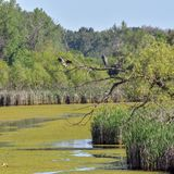 Little Menomonee River in Brown Deer Wisconsin royalty free stock images