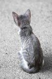 Little Meow Royalty Free Stock Photos