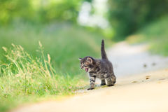 Little meowing kitten Royalty Free Stock Photos