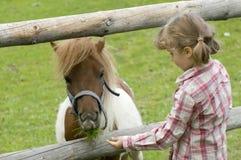 little min ponny Royaltyfria Bilder