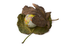 Little model globe placed between two Autumn leaves Stock Photos