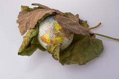 Little model globe placed between two Autumn leaves. Little model globe placed between two large Autumn leaves Stock Images