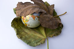 Little model globe placed between two Autumn leaves. Little model globe placed between two large Autumn leaves Stock Photos