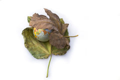 Little model globe placed between two Autumn leaves. Little model globe placed between two large Autumn leaves Stock Image