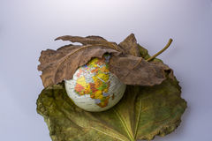 Little model globe placed between two Autumn leaves. Little model globe placed between two large Autumn leaves Stock Photo