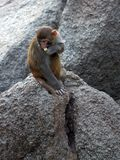 Little monkey Stock Images