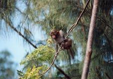 Little monkey Royalty Free Stock Image