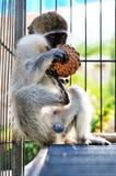 Little monkey Royalty Free Stock Photography
