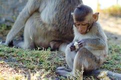 Little monkey. Focusing on food stock photos