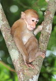 Little monkey Royalty Free Stock Images