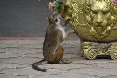 Little monkey  alone Stock Image