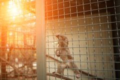 Little monkey is animal in cage the zoo. Little monkey is animal in green cage in the zoo with sunlight light Royalty Free Stock Images
