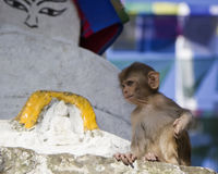 Little monkey in the background - a Buddhist symbol - eyes of  B Stock Photos