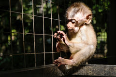 Little monkey in cage, selective focus, with dark dramatic environmanet Stock Image