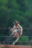 Little monkey climbing on steel fence against blurry background Royalty Free Stock Photo