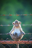 Little monkey climbing on stell fence Stock Images