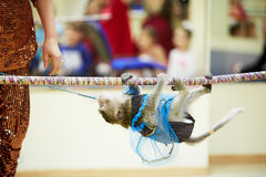 Little monkey climbs on rope. Upside down Stock Image