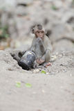 Little monkey Royalty Free Stock Photo