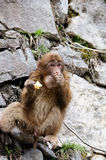 The little monkey is eating an apple stood on the cliff. 