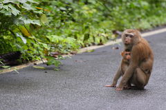 Little monkey hug on mom Stock Photography