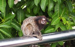 Little monkey. In the park royalty free stock images