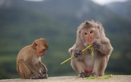 Little monkey and mom sitting on floor Royalty Free Stock Photo