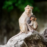 Little monkey and mom Royalty Free Stock Photos