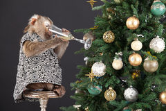 Little Monkey And The New Year's Tree Royalty Free Stock Photo