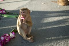 Little monkey with flowers Royalty Free Stock Photos