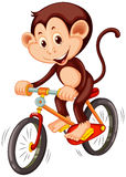 Little monkey riding a bicycle Stock Photography