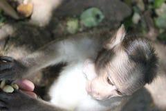 Little monkey`s head stock photo
