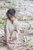 Little monkey shy Royalty Free Stock Photography