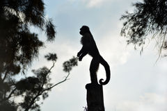 Little monkey silhouette Stock Images