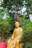 Little monkey is sitting on Buddha statue head Royalty Free Stock Photography
