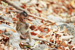 A little monkey sitting Stock Images