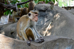 Little monkey sitting on the rock photo Stock Photo