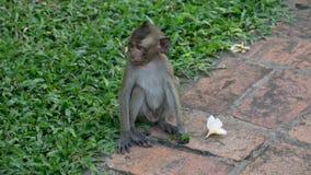 Little Monkey Sitting on side Walkway. With Grass background Pethburi Thailand Stock Photos