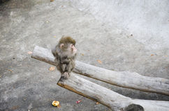 Little monkey sitting on a tree Royalty Free Stock Photography
