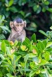 Little monkey on tree Stock Photo