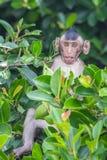 Little monkey on tree Stock Image