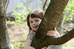 Little monkey on a tree Royalty Free Stock Images