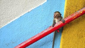 Little monkey on wall