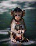 Little monkey in wild Royalty Free Stock Photos