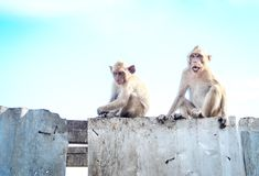 Little monkeys waiting freing royalty free stock image