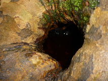 Little monsters inside a hollow tree. Light reflection on water inside a hollow tree stock photo