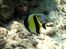 Little Moorish Idol Royalty Free Stock Photos