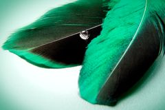 A little more green feather. Emplumed mood with accent on a brilliant drop Royalty Free Stock Photo