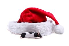 Little mose and Santa hat Stock Image