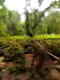 Little Moss Sprouts royalty free stock images