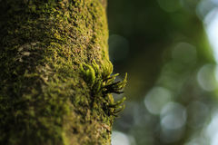 Little moss on the tree. Little moss growing on the tree in the rain forest Stock Photos